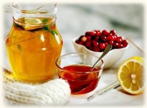 Калина с медом - лучшее средство при простуде